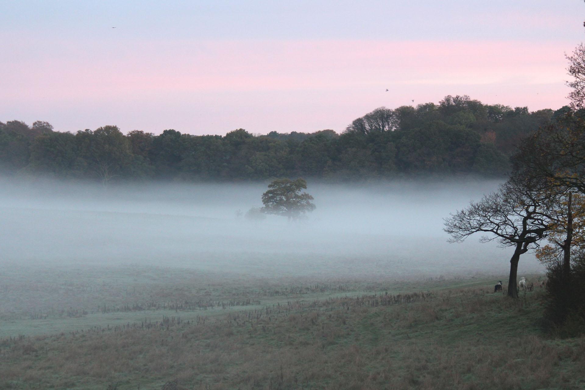 Bulstrode park mist
