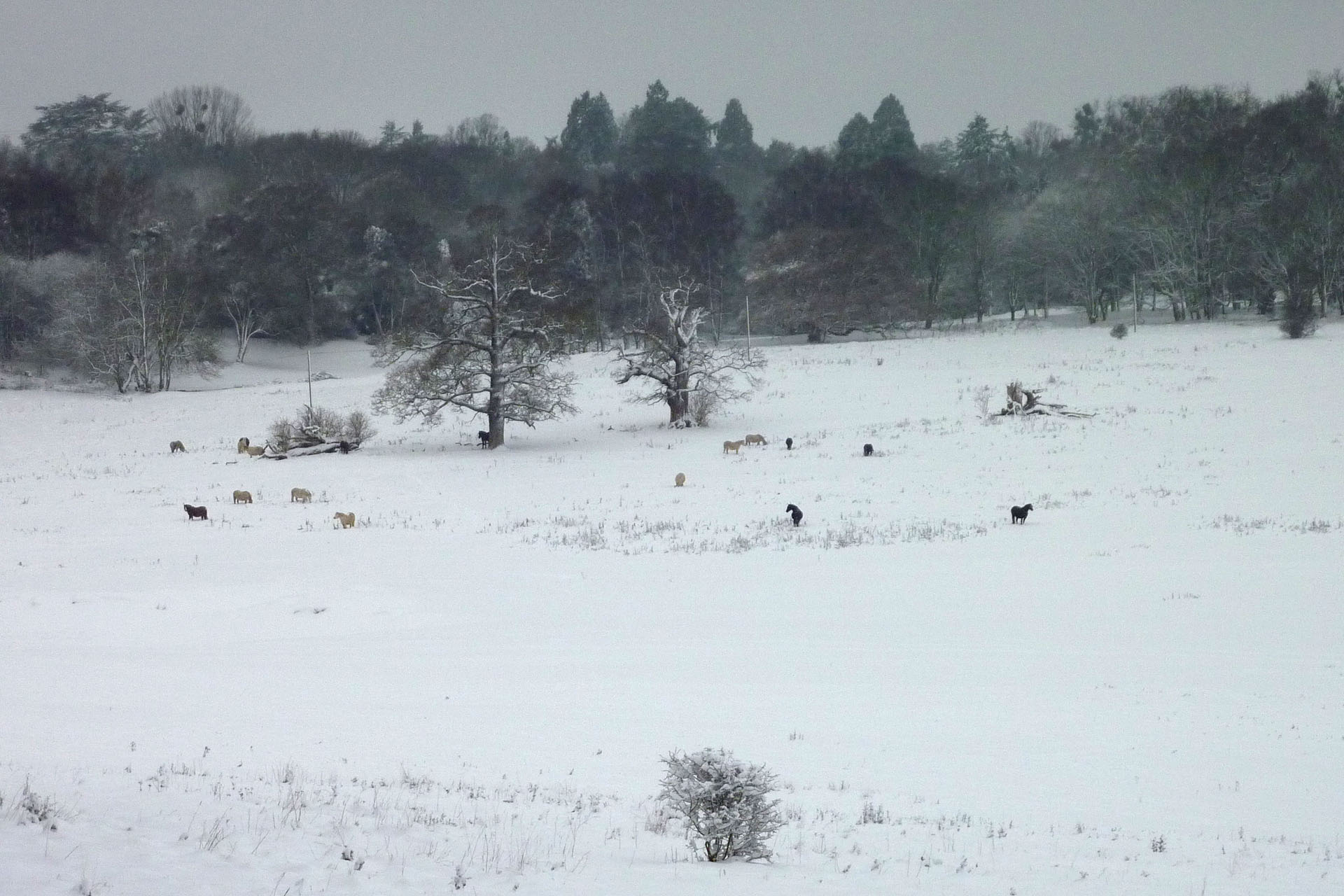 Bulstrode park snow