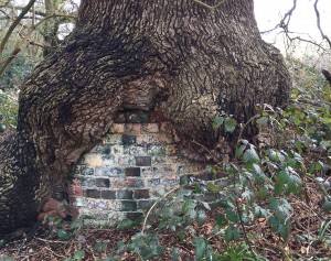 Bulstrode Camp old oak with brick support