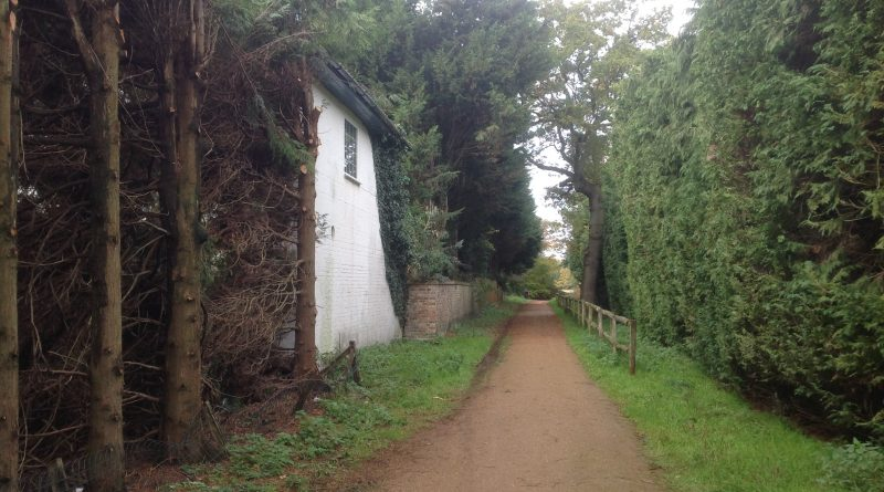 Camp entrance conifers 1